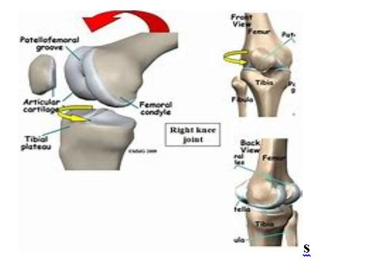 Locking and Unlocking Of Knee Joint