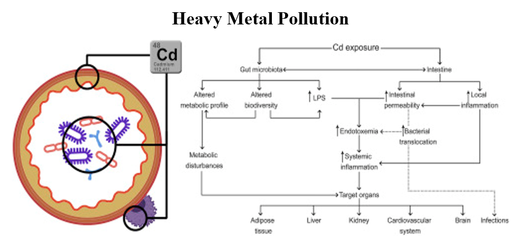 Heavy Metal Pollution