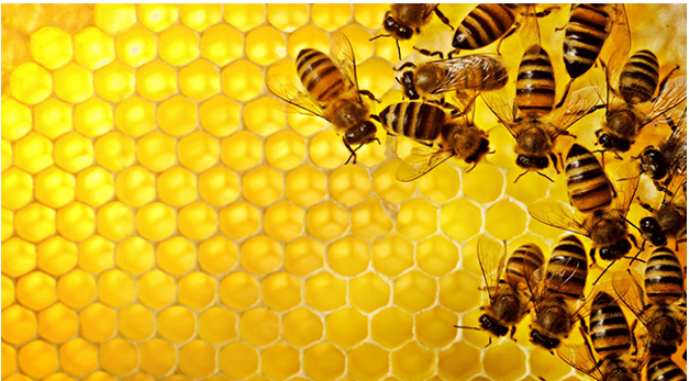 Hexagonal Secret Formation Of Honey Comb