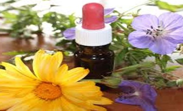 Plant Based Therapies for Autism spectrum Disorder