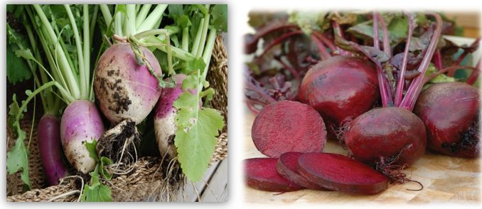 Difference Between- Beets and Turnips