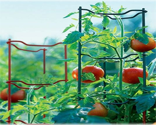 Stacking In Tomato