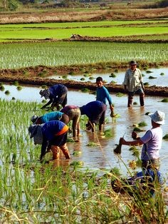 Puddling In Agriculture